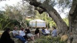 Under the Ancient Olive Tree